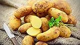 Tepenhof Frische Kartoffeln Frühkartoffeln Annabell festkochend super lecker 12,5kg goldgelb Kartoffel Annab